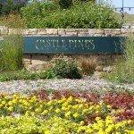 Castle Pines North Market Review