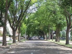 Trees in Denver