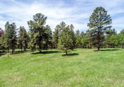 26799_Mirage_Dr_Conifer_CO-small-047-5-Aerial_Meadow_1-666x375-72dpi