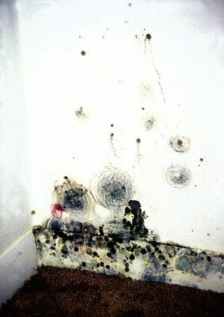Moisture in Crawl Space