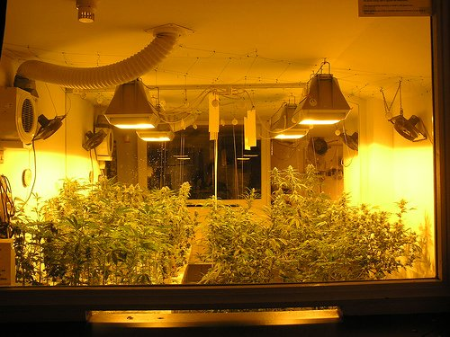Growing marijuana can be legal in Colorado but it raises more home inspection issues.