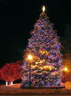 Littleton Colorado Christmas Tree