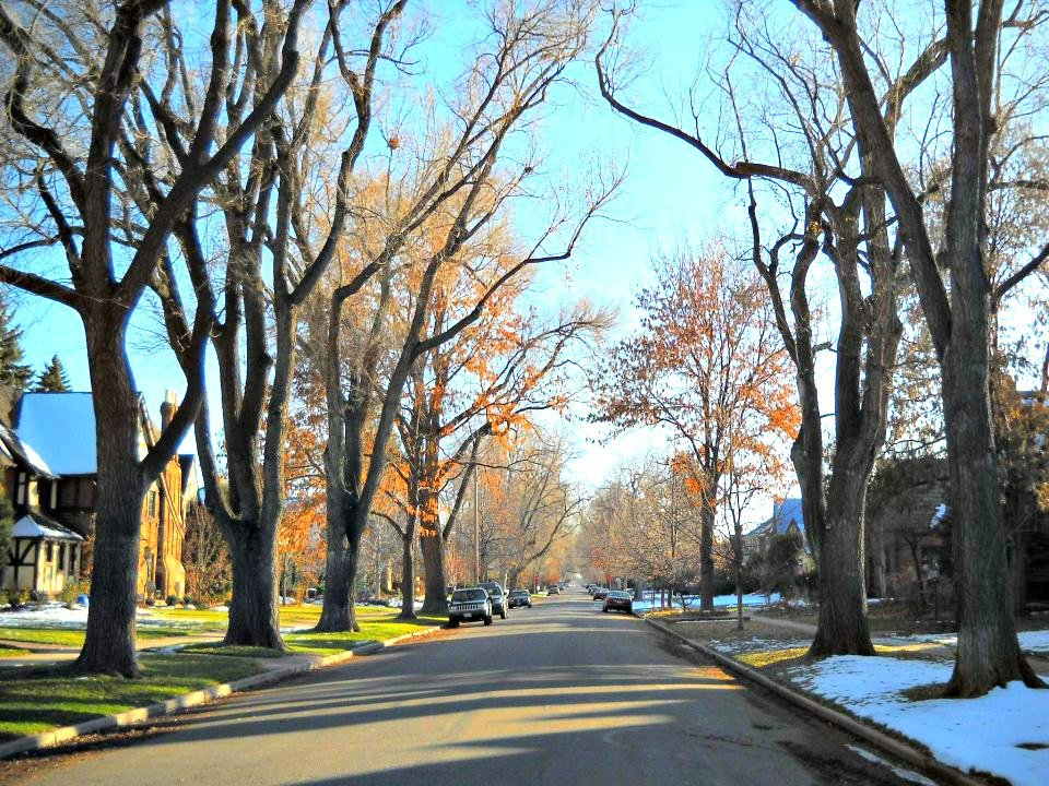 Unlike much of Denver, huge, old trees line many streets in Park Hill.