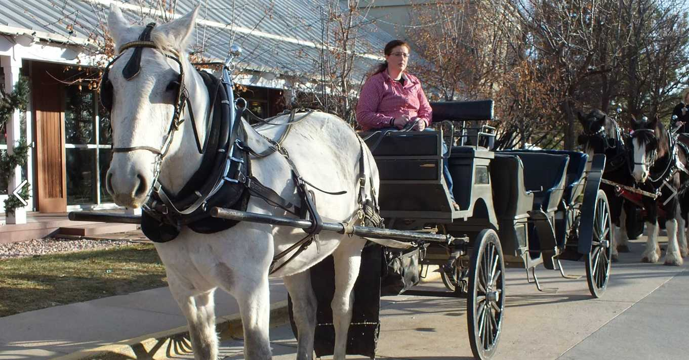 History still lives in Parker, Colorado. Special events can include drawn horse carriage like this on in Stroh Ranch.